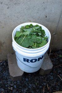 fertilisant liquide, consoude, ortie,