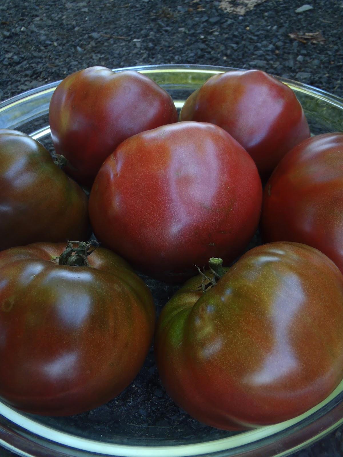 Tomate noire de crim e le potager ornemental de catherine - Noir de crimee ...
