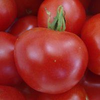 Tomate Stupice