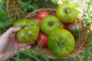 Tomate Malachite Box