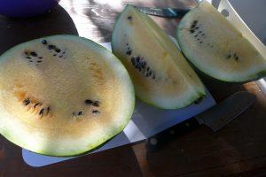 Melon d'eau Gros Orange